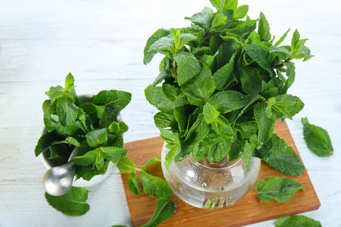 Composition with fresh mint on light wooden table