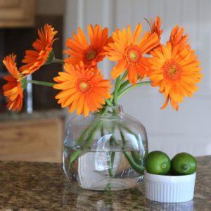 gerba daisy