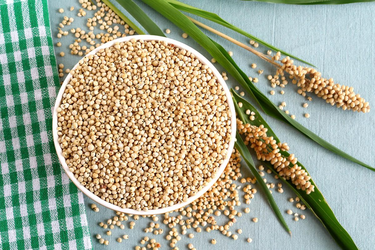 Healthy food sorghum and sorghum leaves and seed heads