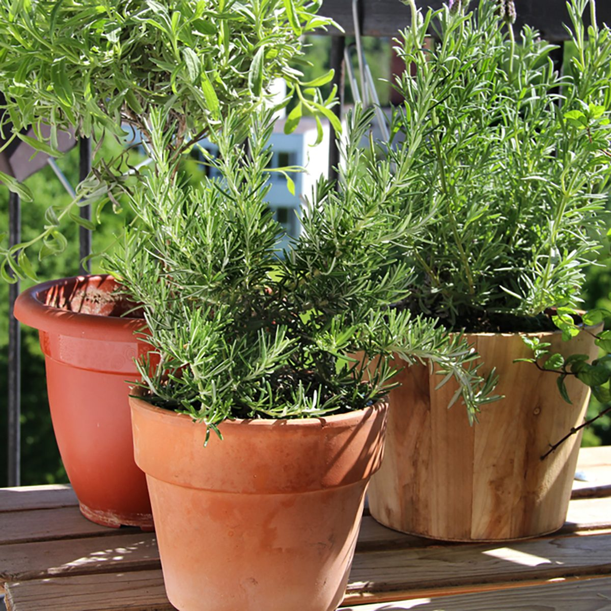 Rosemary, mint, lavender and other herbs in the pot