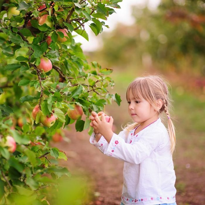 Young girl picking apples