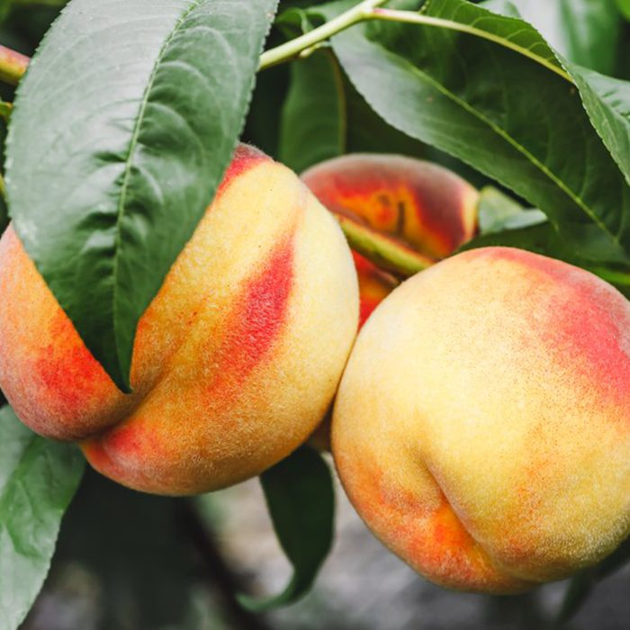 Eddie Romero's Orchard