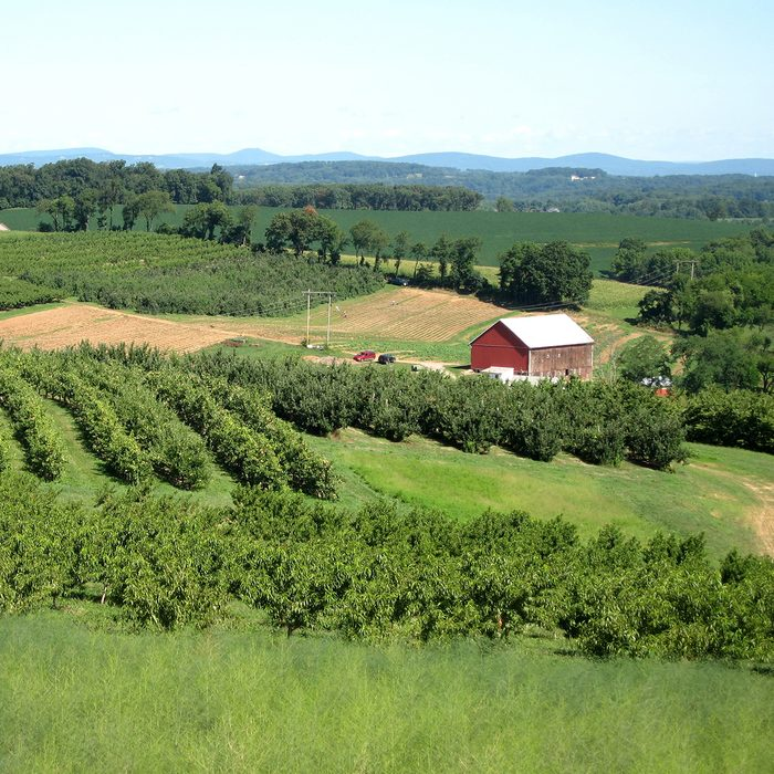 Brown's Orchards