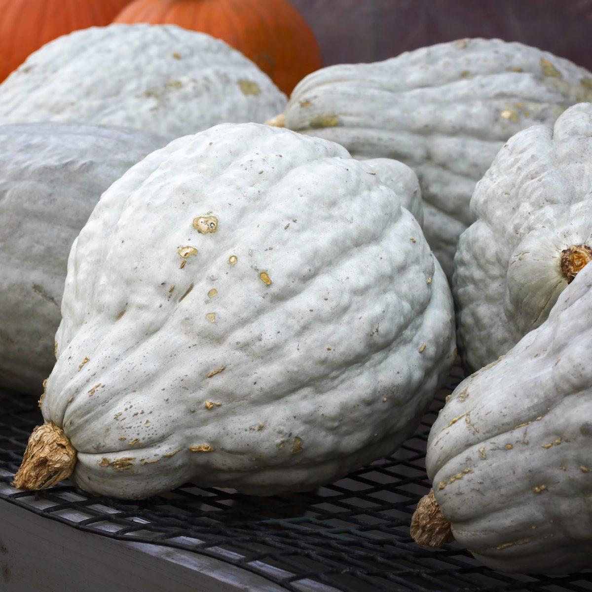 Blue hubbard squash and pumpkins sold in a farm