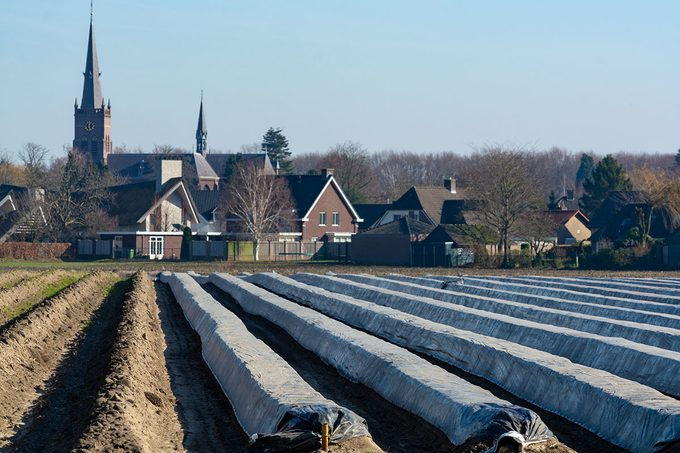 Rows on white asparagus fields covered with plastic film, begin of new asparagus season on asparagus farm in Netherlands, spring country landscape; Shutterstock ID 1315775426; Job (TFH, TOH, RD, BNB, CWM, CM): Taste of Home