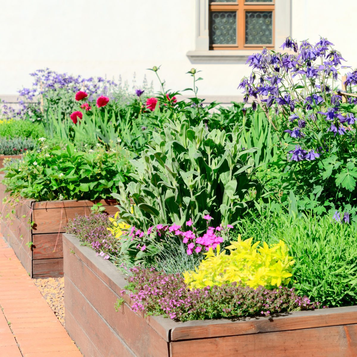 Raised beds in an urban garden growing plants flowers, herbs spices and berries; Shutterstock ID 1407108191; Job (TFH, TOH, RD, BNB, CWM, CM): TOH Edible Landscaping