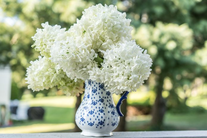 Cut hydrangea flower heads in blue and white pitcher outdoors.