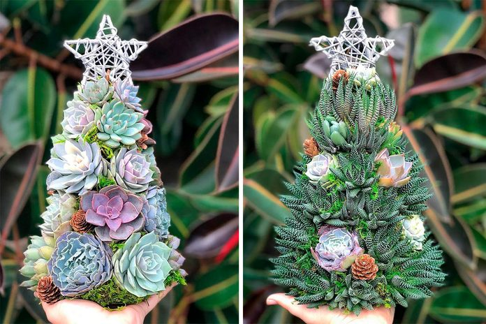 "13"" Aurora Succulent Tree (made to order)"