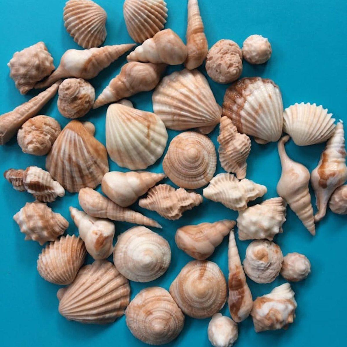 Sea Shell fondant topper 50pcs Beach cake topper beach cupcake toppers sea shore edible sea shells party favors summer decorations