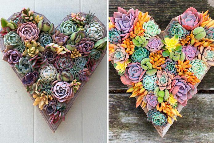 """11"""" Living Succulent Heart"""
